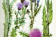 Kvety a byliny