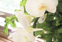 Jardinagem / Flores