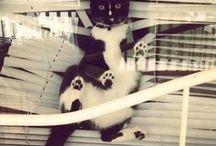Cats / Cat humour