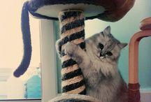 Tissue the Cat