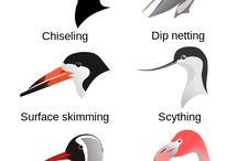 Bird theme activity