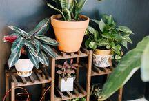 Plant placement