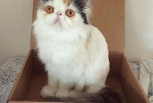 Cats in CatLadyBox