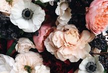Florals / Beautiful flowers to brighten the mood