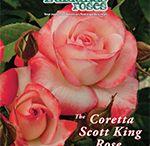 Edmunds Roses