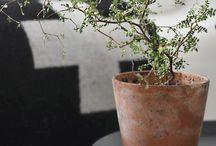 Plants for Interior Design