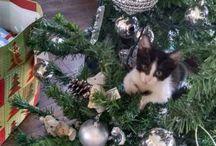 Navidad en Nidito