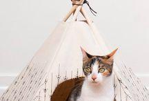 Cats&pets