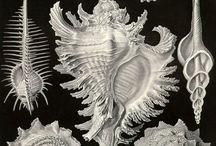Trarzos   Cientific illustration   Sea