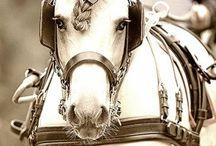 Heste inspirasjon