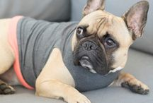 Jolie Dog tops / Dog tops handmade in the UK from soft, warm cotton and Lycra. Available in a range of colours and patterns.