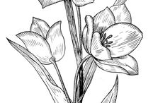Kwiatowe wzory pergaminowe