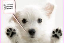 Cute Pets / by Victoria Chart Company