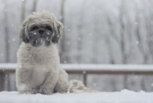 Love those Shih Tzu's! / Love my babies Chloe and Odie!  They bring so much joy into my life! / by Kilah Wilkinson
