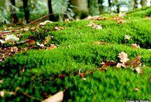 Live Garden Moss