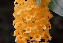 Kwiaty doniczkowe uprawa, przesadzanie