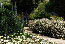 Garden Paths / Wandering through the garden