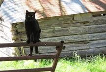 Farmgirl Fare Farm Cats / by Farmgirl Fare