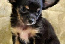 Cuteness - pups