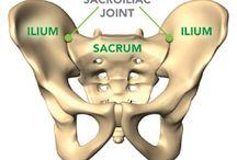 Muscle, joints, bones