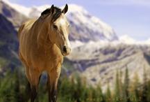 Horses......