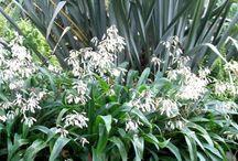 native planting design