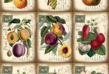 labels pictures fleurs decoupage roses