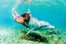 Delfín con humanos