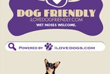Dog Friendly / by National Mill Dog Rescue