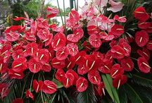 flores o ano todo