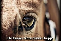because I love horses