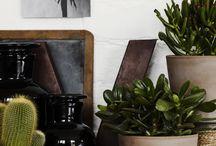 Plants & Flowers Indoors
