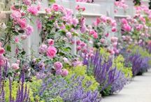 Dreamy Garden Ideas