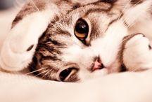 I  L O V E  C A T S ! / Cats / Poezen / Katten