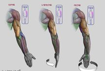 Male Arms Poses