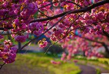 Tavasz(Spring)