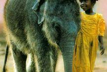 Ihminen ja eläin yhdessä.