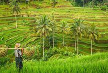 INDONESIA 2015