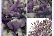 My photographic work / Algunas fotos que me gusta compartir
