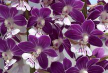 orkide resmi