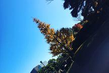 Trip in tokyo