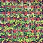 Gardenista Urban Gardens / by Carol