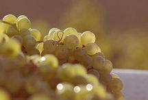 Wine Club Wines