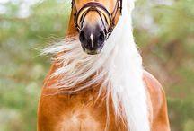 lovas képek