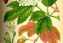 Pflanzen_gezeichnet
