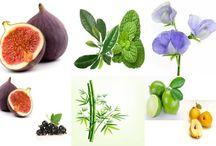 Oils / Essential Oils and Perfume Oils