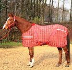 Dla koni