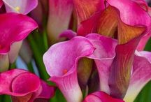 λουλούδια