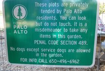 Palo Alto Library / Visited October 3, 2017, website: http://www.cityofpaloalto.org/gov/depts/lib/default.asp, twitter: @cityofpaloalto