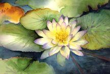 Seerose gemalt